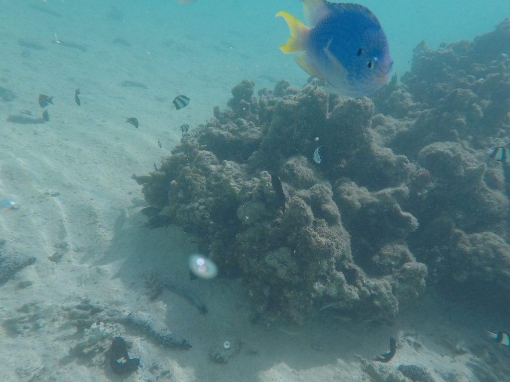 Aitutaki - Snorkeling