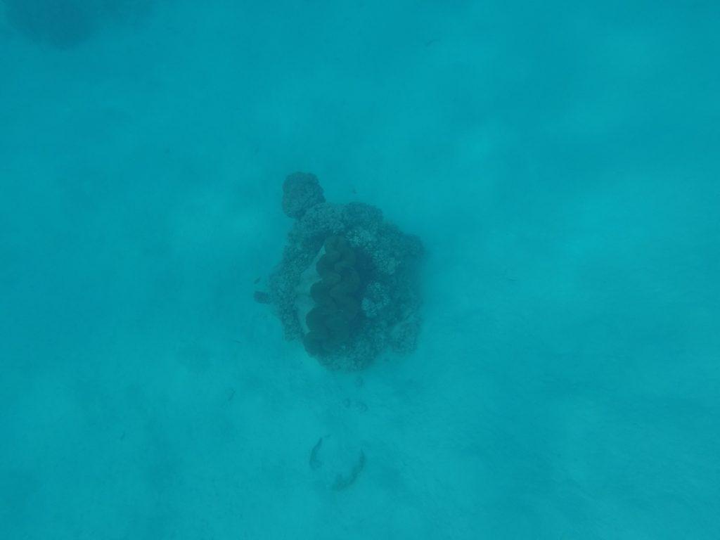 Clams - Snorkeling - Aitutaki - iles Cook
