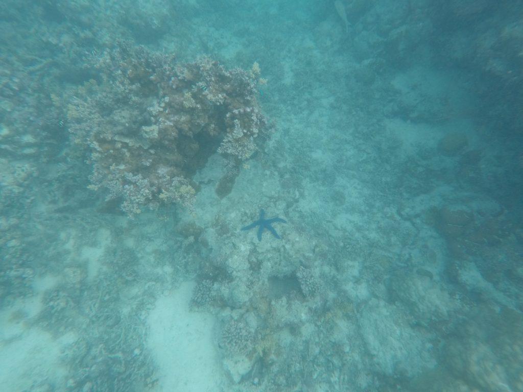 Snorkeling - Aitutaki - iles Cook