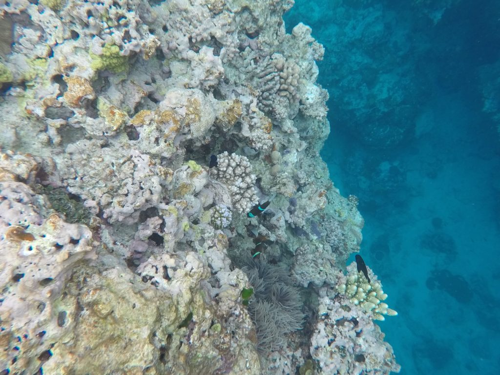 snorkeling-ouvea-caledonie
