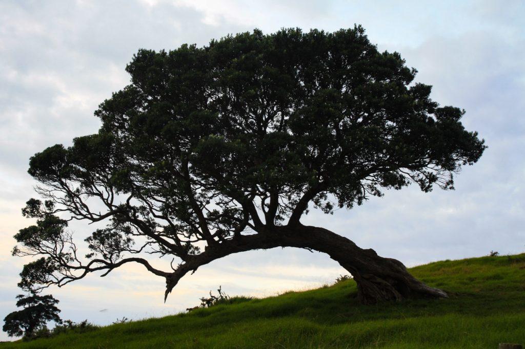 Sunset Waiheke Island